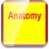 anatomy-icon